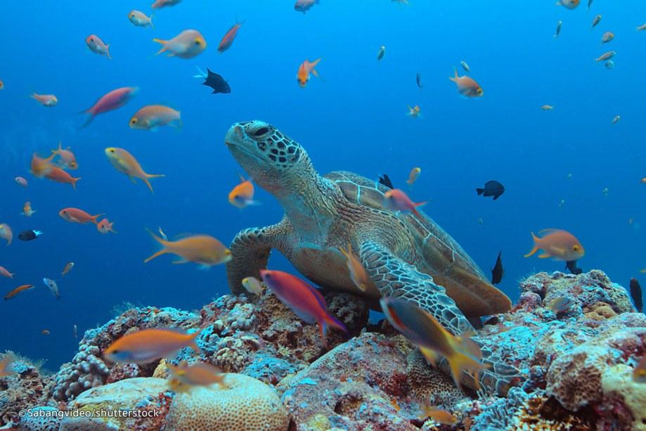 tubbataha-reef-2